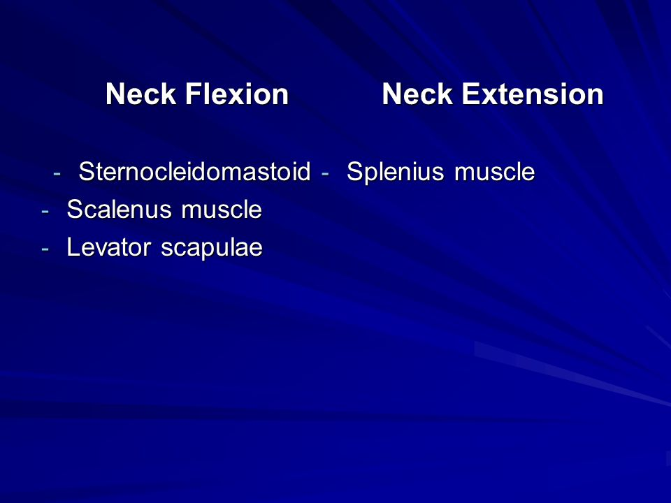 Neck Extension Neck Flexion Sternocleidomastoid Scalenus muscle