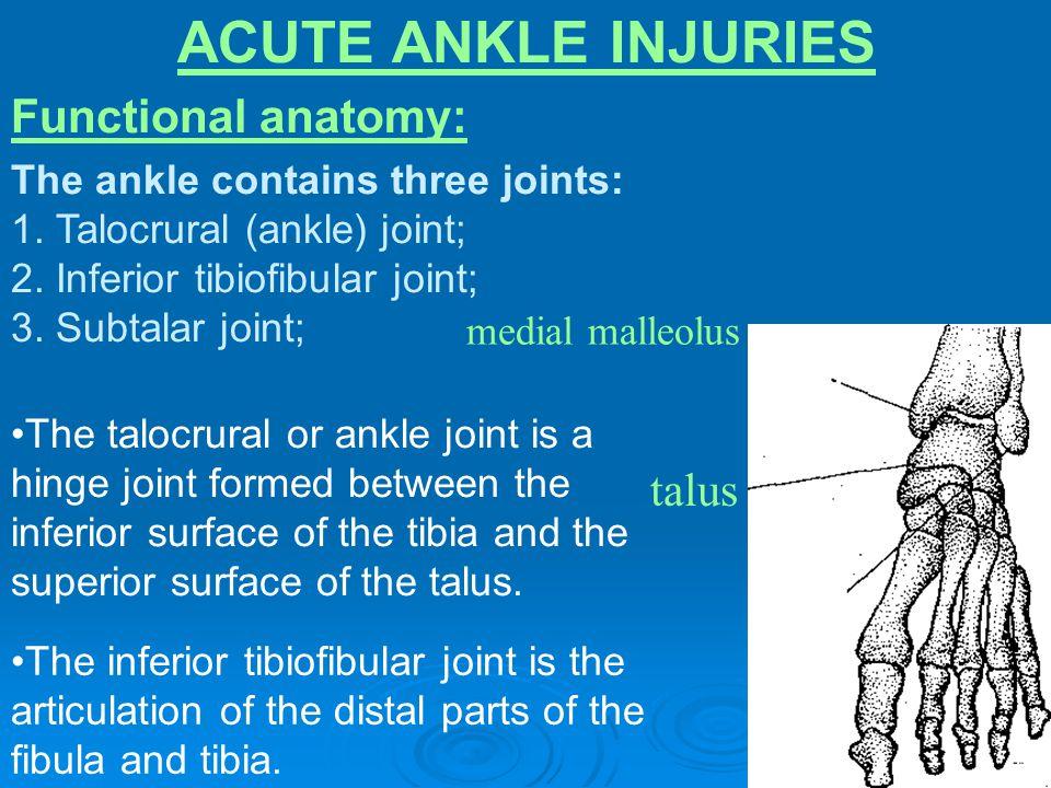 ACUTE ANKLE INJURIES Functional anatomy: talus medial malleolus