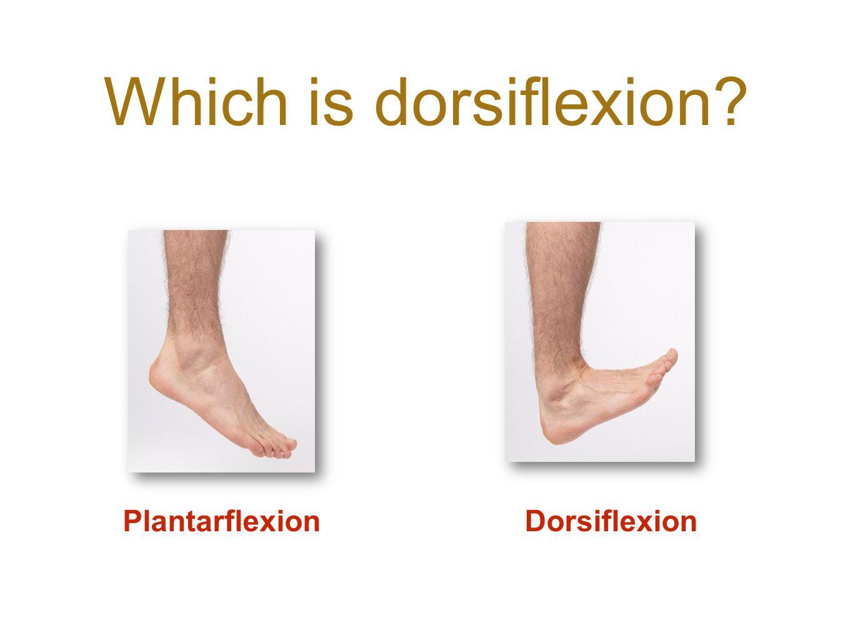 Which is dorsiflexion Plantarflexion Dorsiflexion