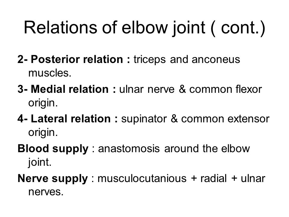 Relations of elbow joint ( cont.)