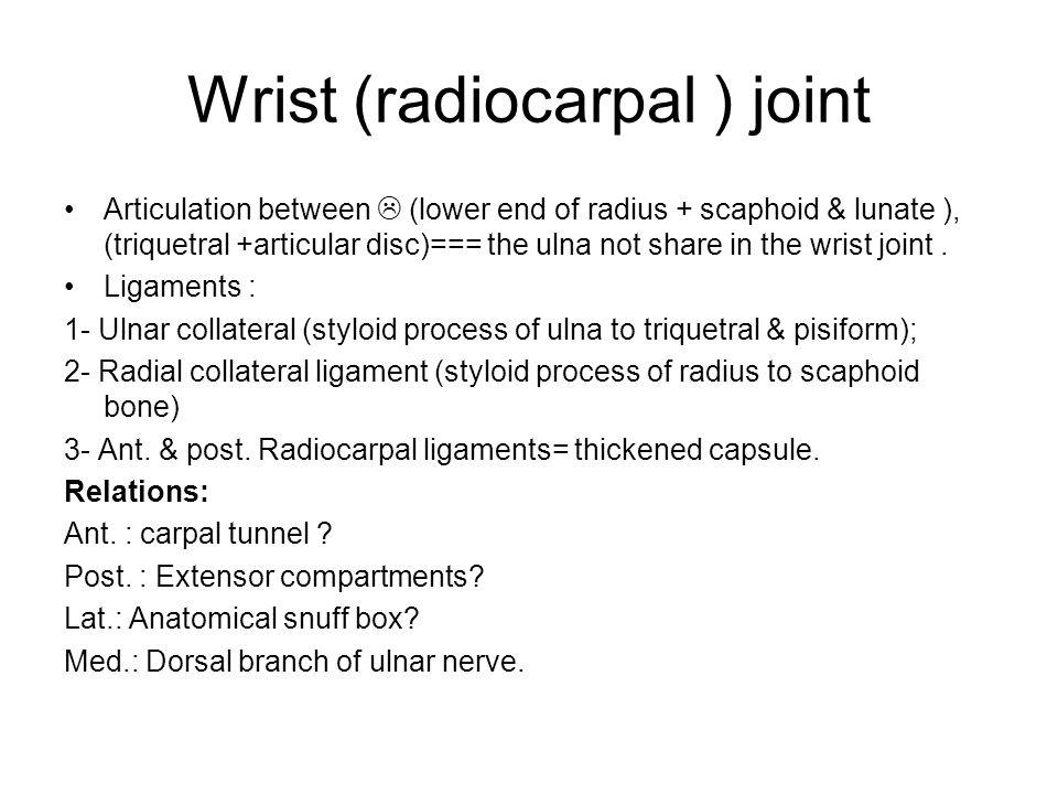 Wrist (radiocarpal ) joint