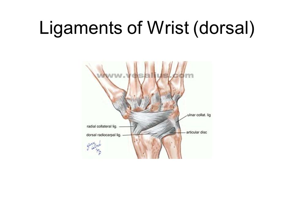 Ligaments of Wrist (dorsal)