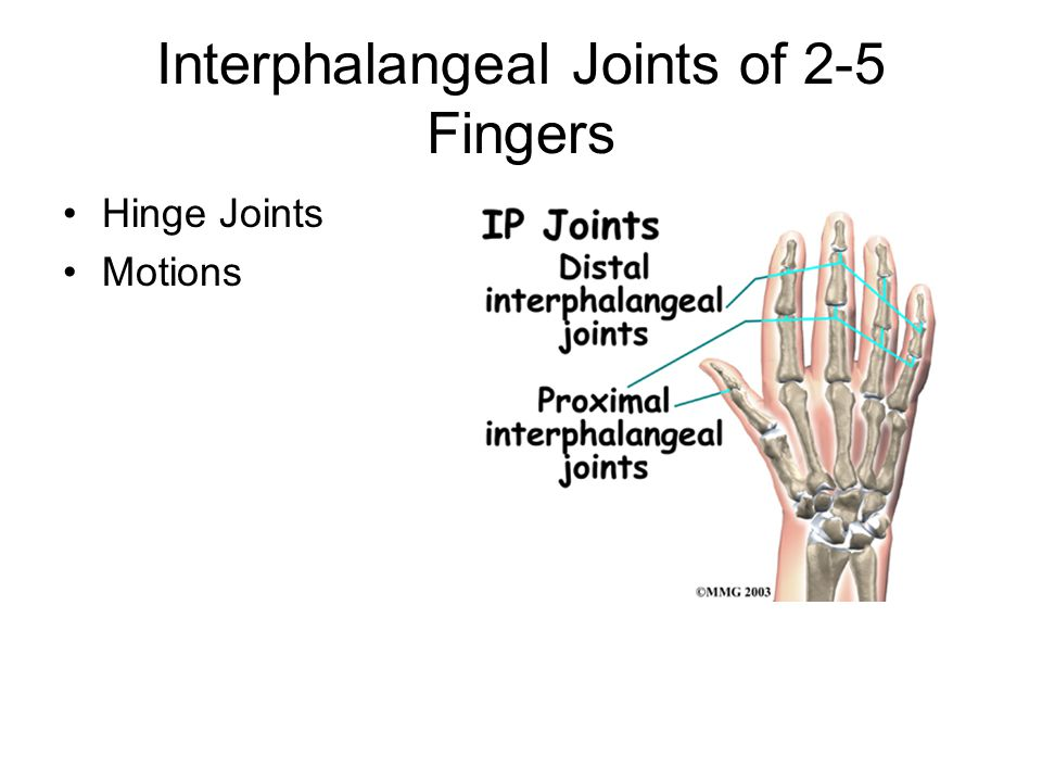 Interphalangeal Joints of 2-5 Fingers