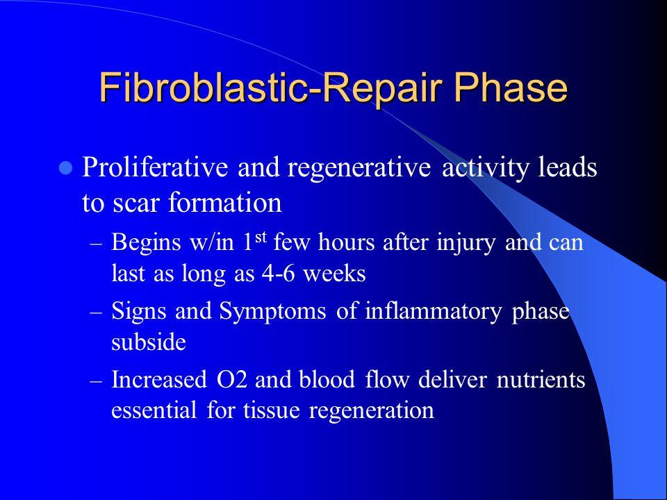 Fibroblastic-Repair Phase