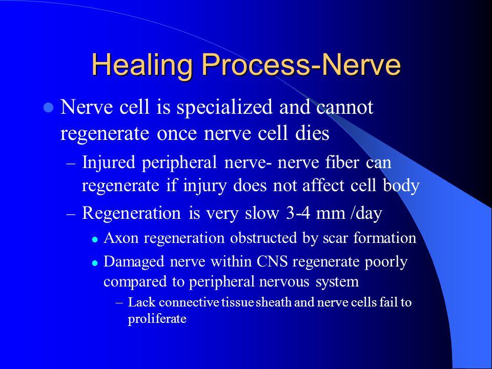 Healing Process-Nerve