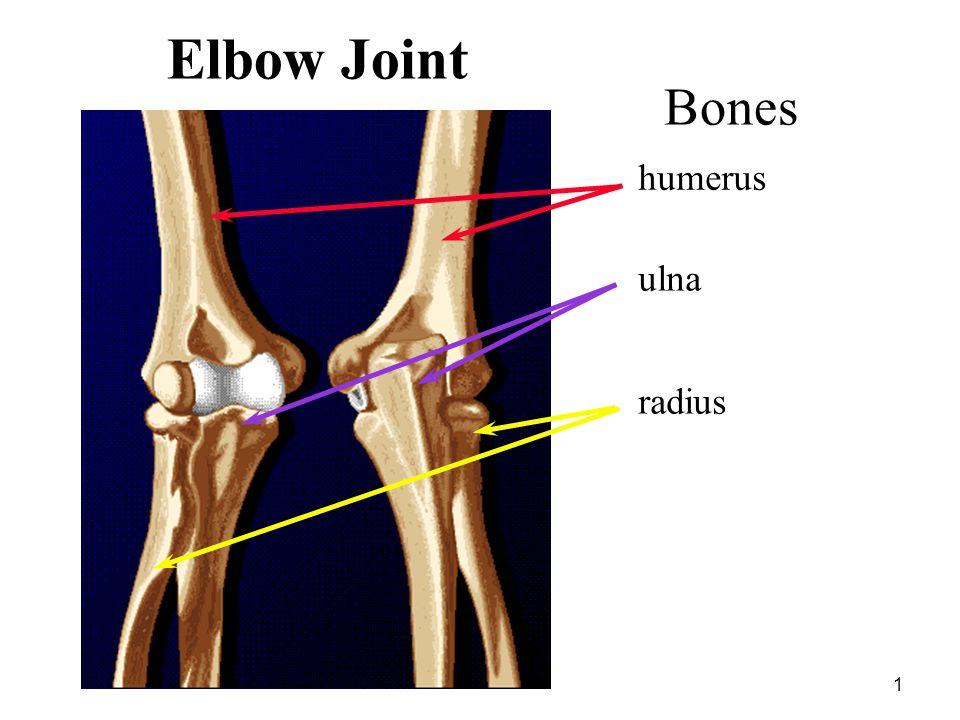 Elbow Joint Bones humerus ulna radius Elbow & Wrist