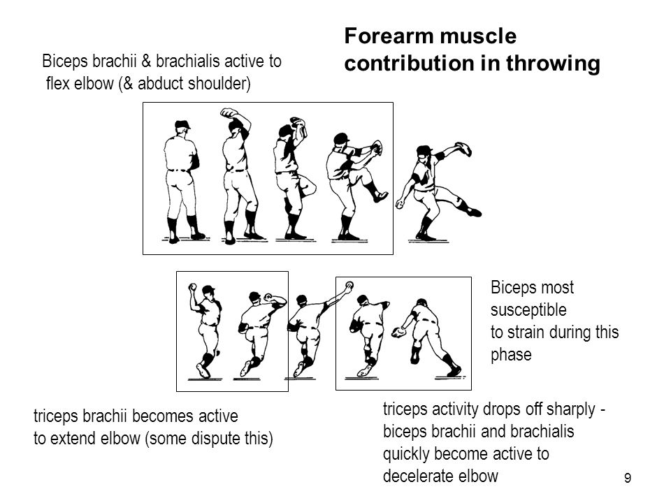 Forearm muscle contribution in throwing