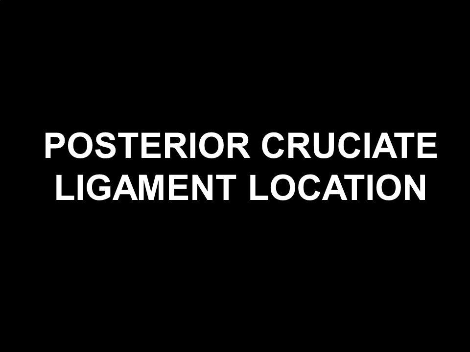 POSTERIOR CRUCIATE LIGAMENT LOCATION