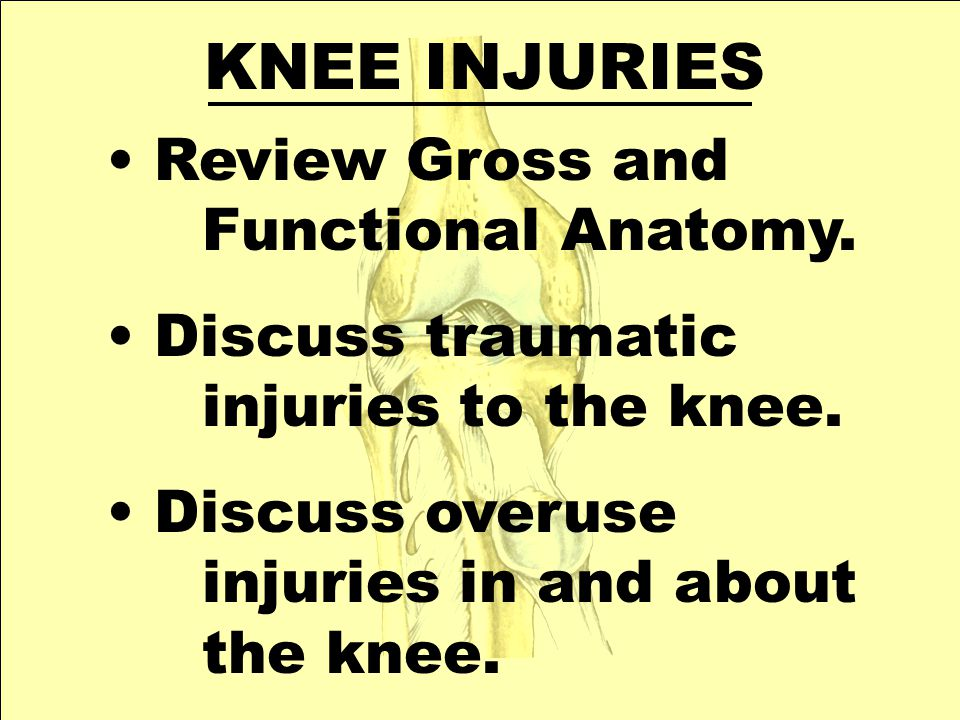 KNEE INJURIES Review Gross and Functional Anatomy.