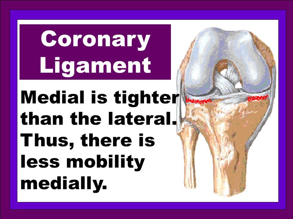 Coronary Ligament Medial is tighter than the lateral. Thus, there is less mobility medially.