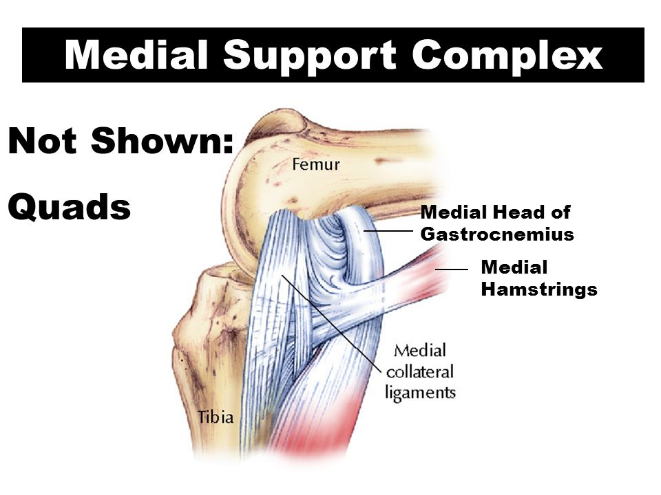Medial Support Complex