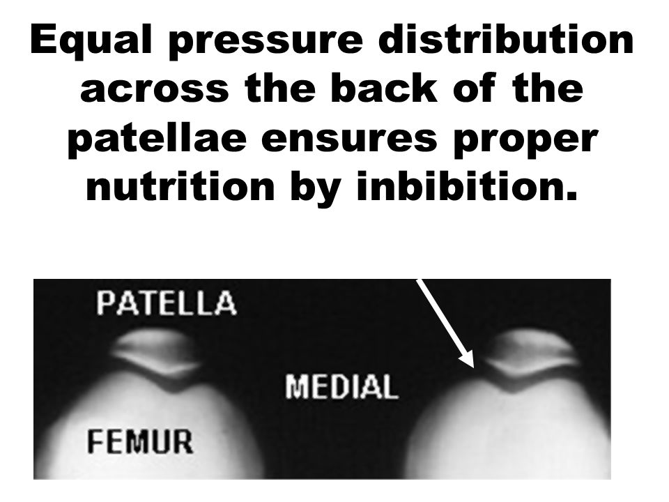 Equal pressure distribution across the back of the patellae ensures proper nutrition by inbibition.