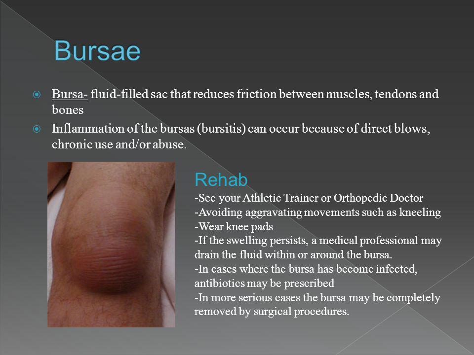 Bursae Bursa- fluid-filled sac that reduces friction between muscles, tendons and bones.