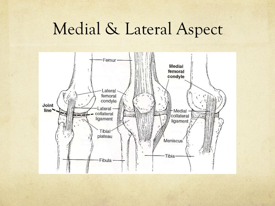 Medial & Lateral Aspect