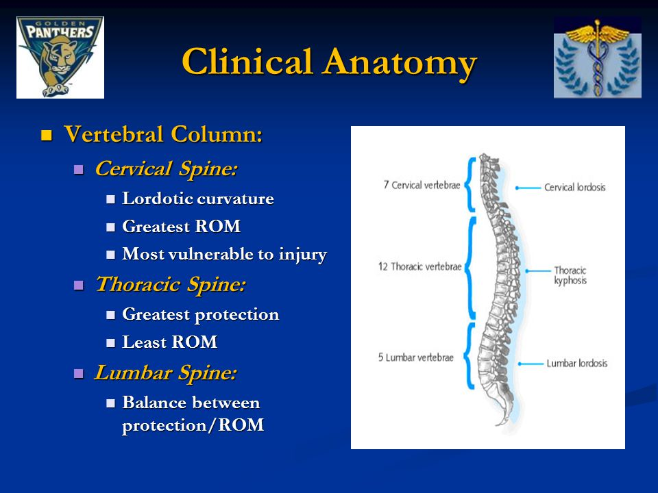 Clinical Anatomy Vertebral Column: Cervical Spine: Thoracic Spine: