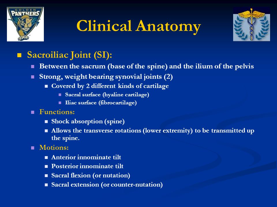 Clinical Anatomy Sacroiliac Joint (SI):