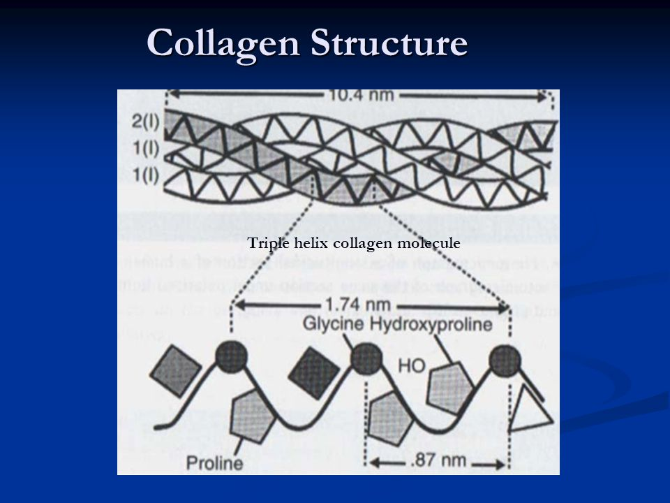 Collagen Structure Triple helix collagen molecule