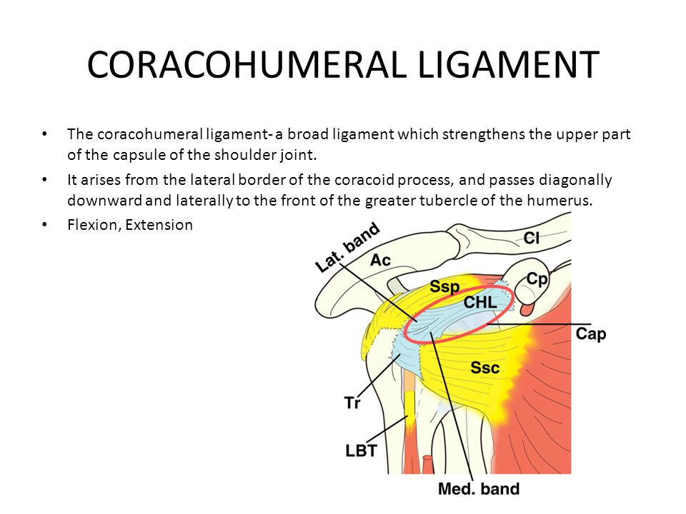 CORACOHUMERAL LIGAMENT