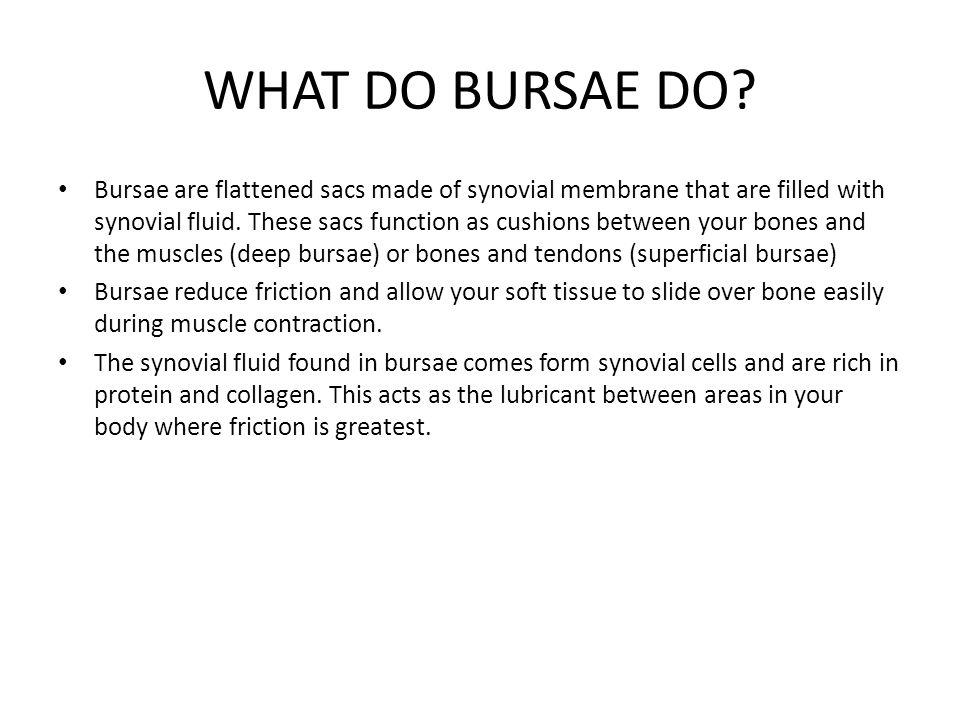 WHAT DO BURSAE DO