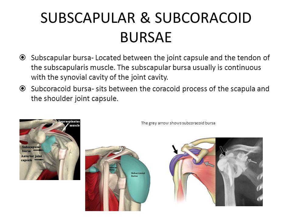 SUBSCAPULAR & SUBCORACOID BURSAE