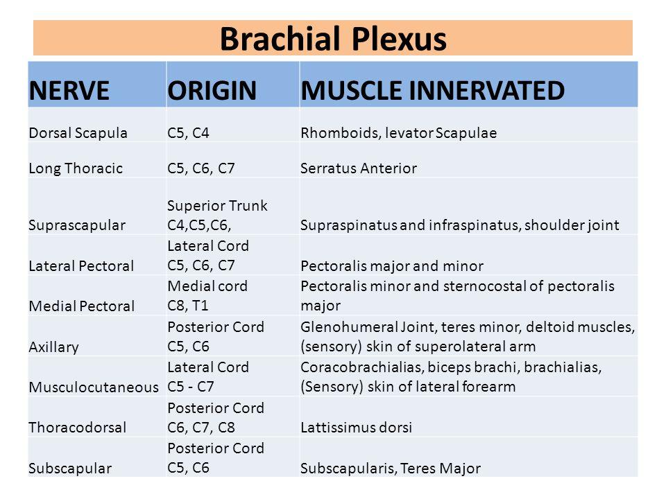 Brachial Plexus NERVE ORIGIN MUSCLE INNERVATED Dorsal Scapula C5, C4