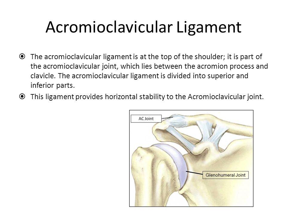 Acromioclavicular Ligament