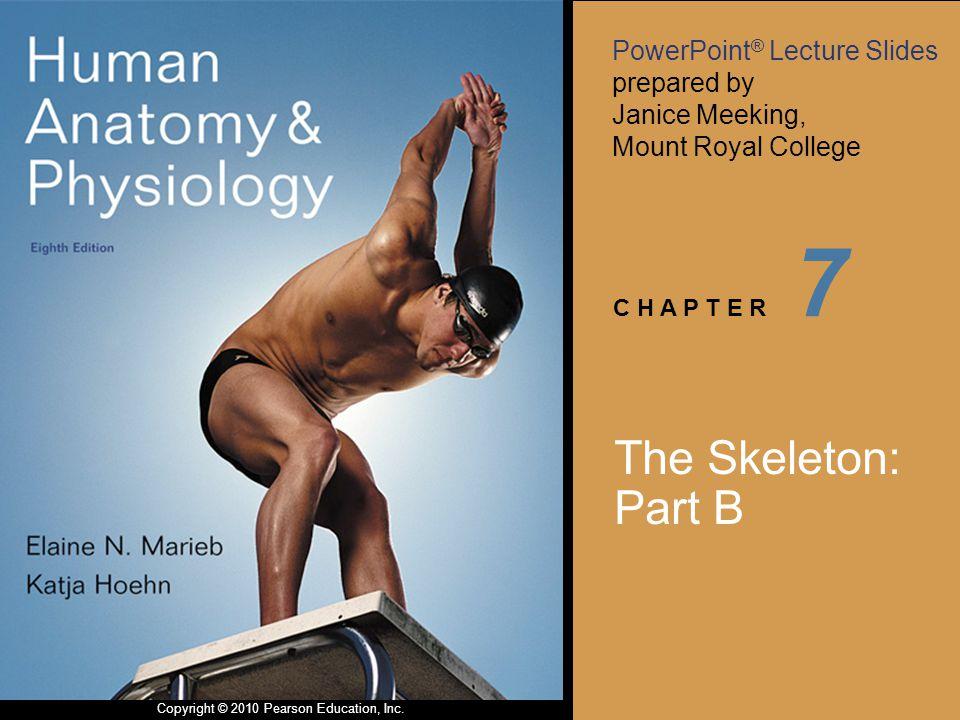 7 The Skeleton: Part B
