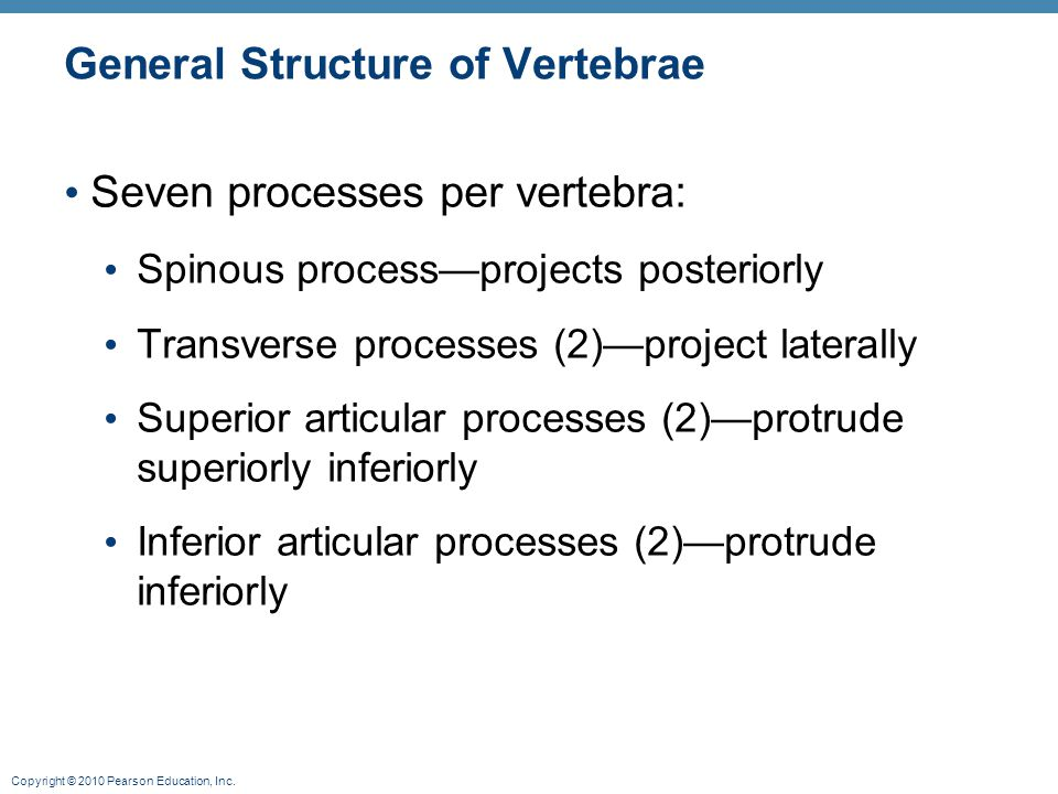 General Structure of Vertebrae