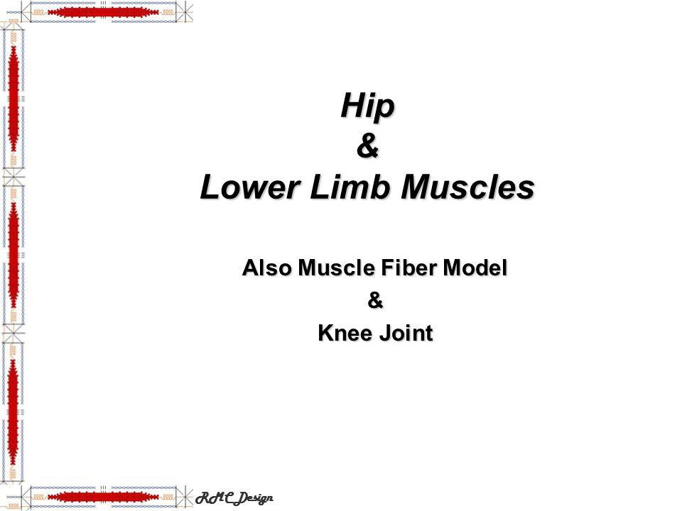 Hip & Lower Limb Muscles