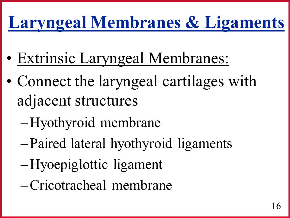 Laryngeal Membranes & Ligaments