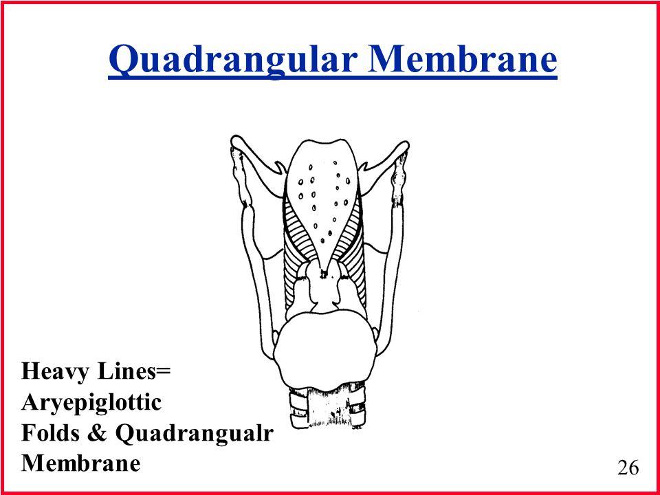 Quadrangular Membrane