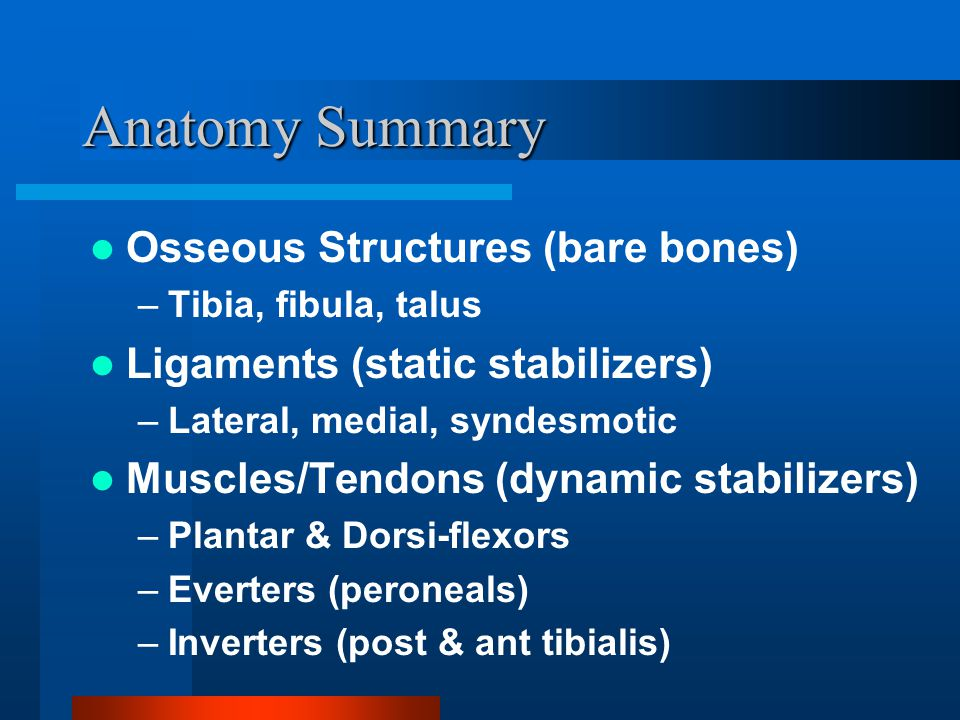 Anatomy Summary Osseous Structures (bare bones)