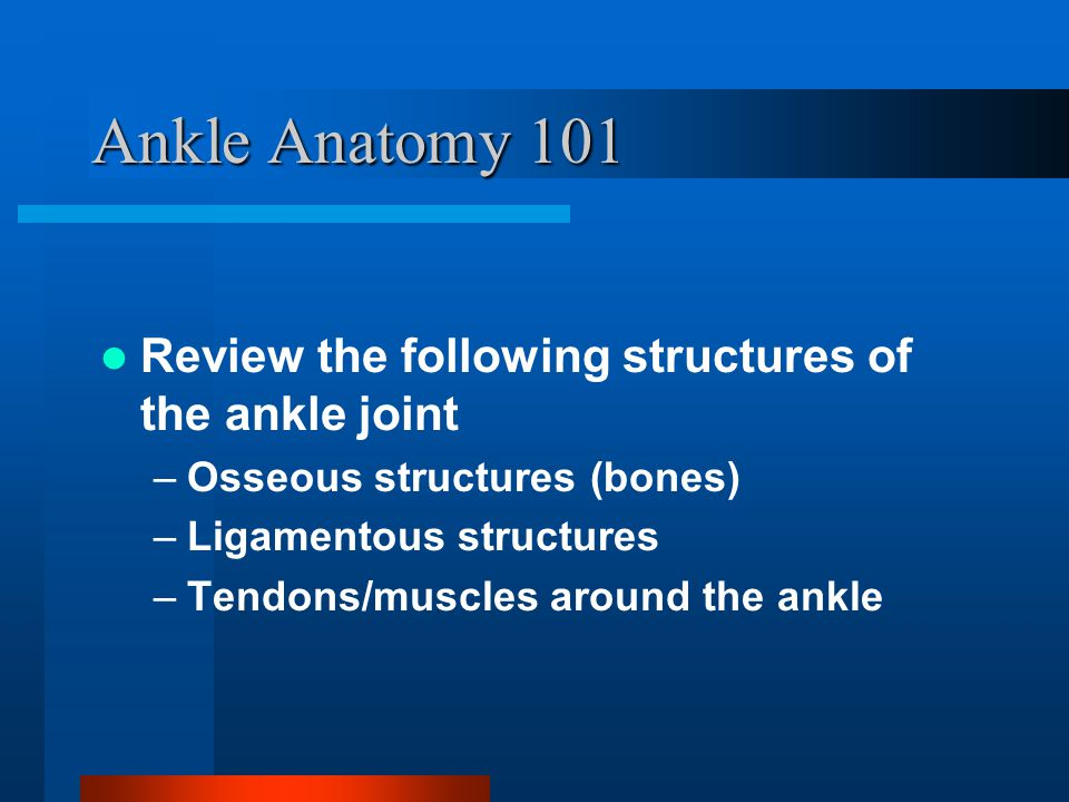 Ankle Anatomy 101 Review the following structures of the ankle joint
