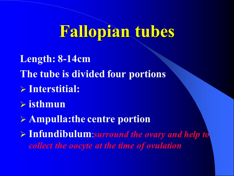Fallopian tubes Length: 8-14cm The tube is divided four portions