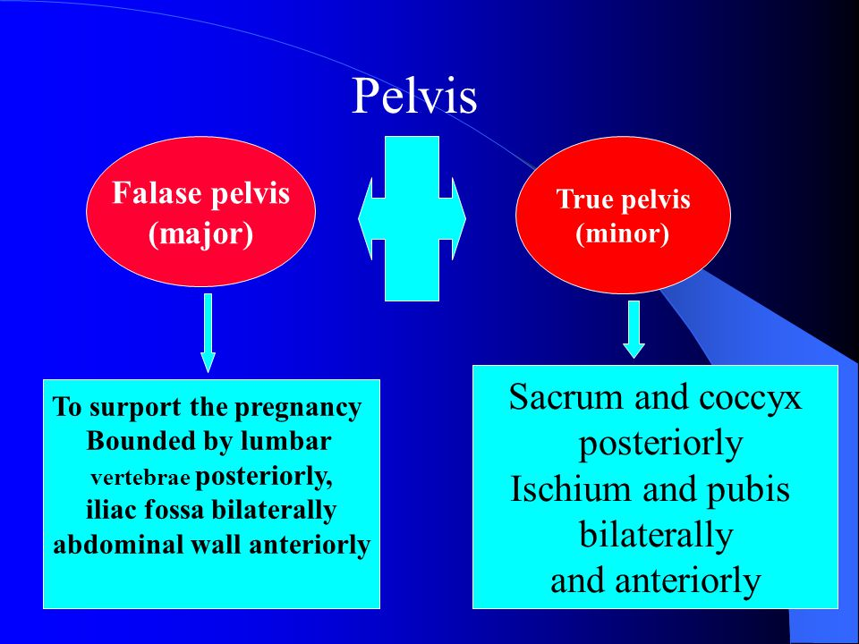 Pelvis Sacrum and coccyx posteriorly Ischium and pubis bilaterally