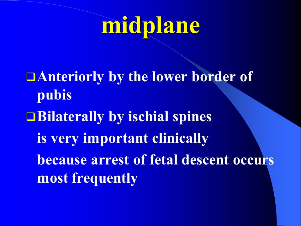 midplane Anteriorly by the lower border of pubis