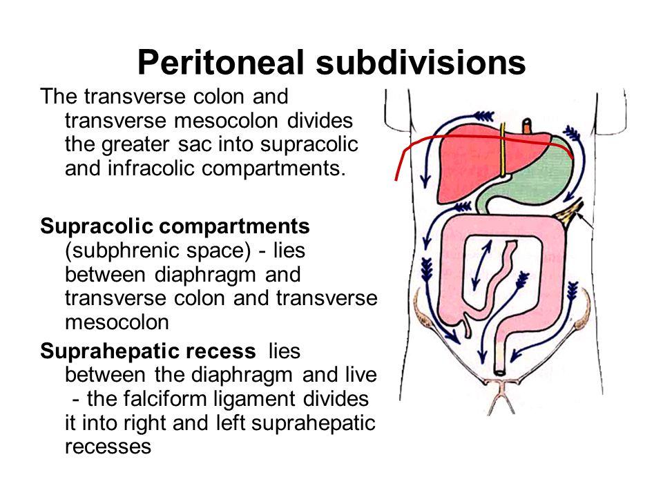 Peritoneal subdivisions