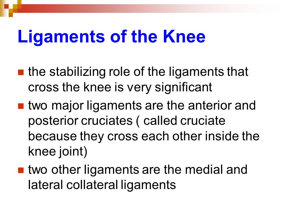 Ligaments of the Knee the stabilizing role of the ligaments that cross the knee is very significant.