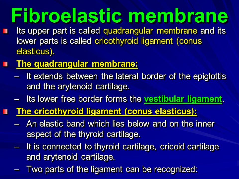 Fibroelastic membrane