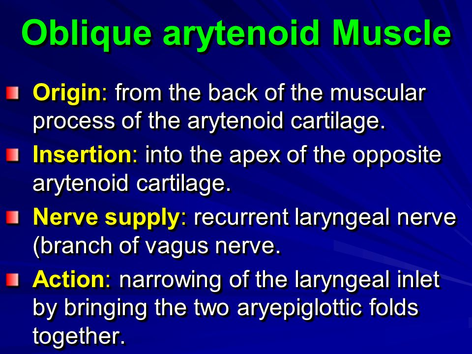 Oblique arytenoid Muscle