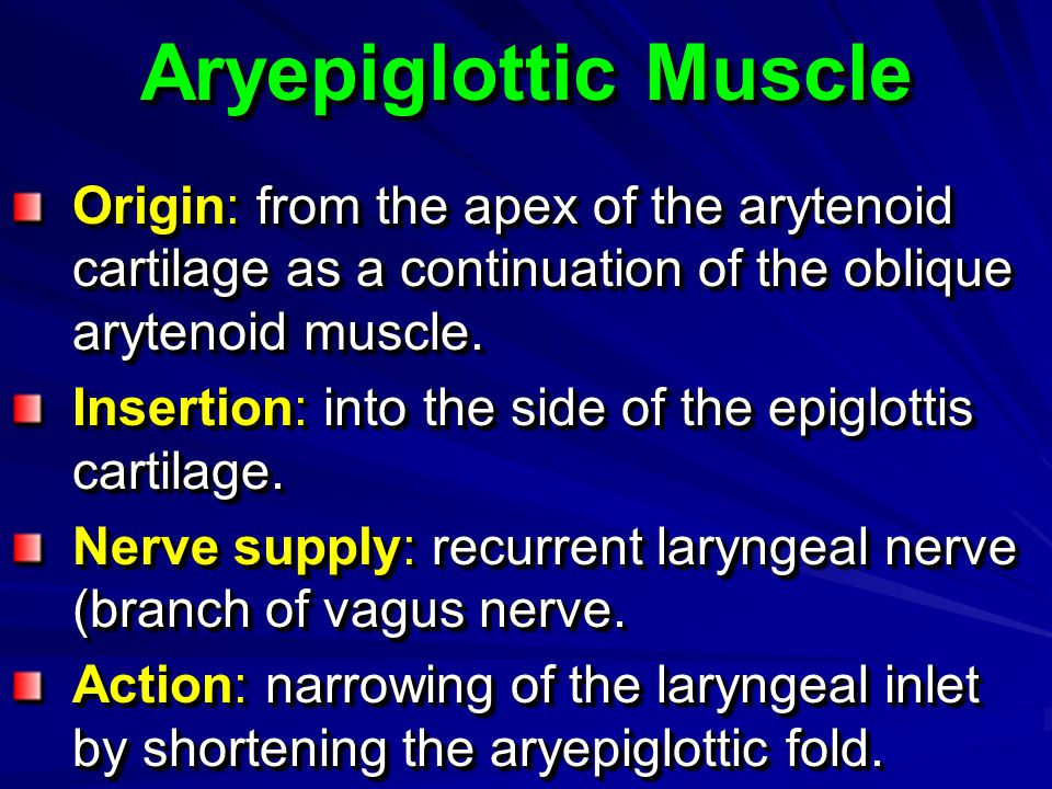 Aryepiglottic Muscle Origin: from the apex of the arytenoid cartilage as a continuation of the oblique arytenoid muscle.