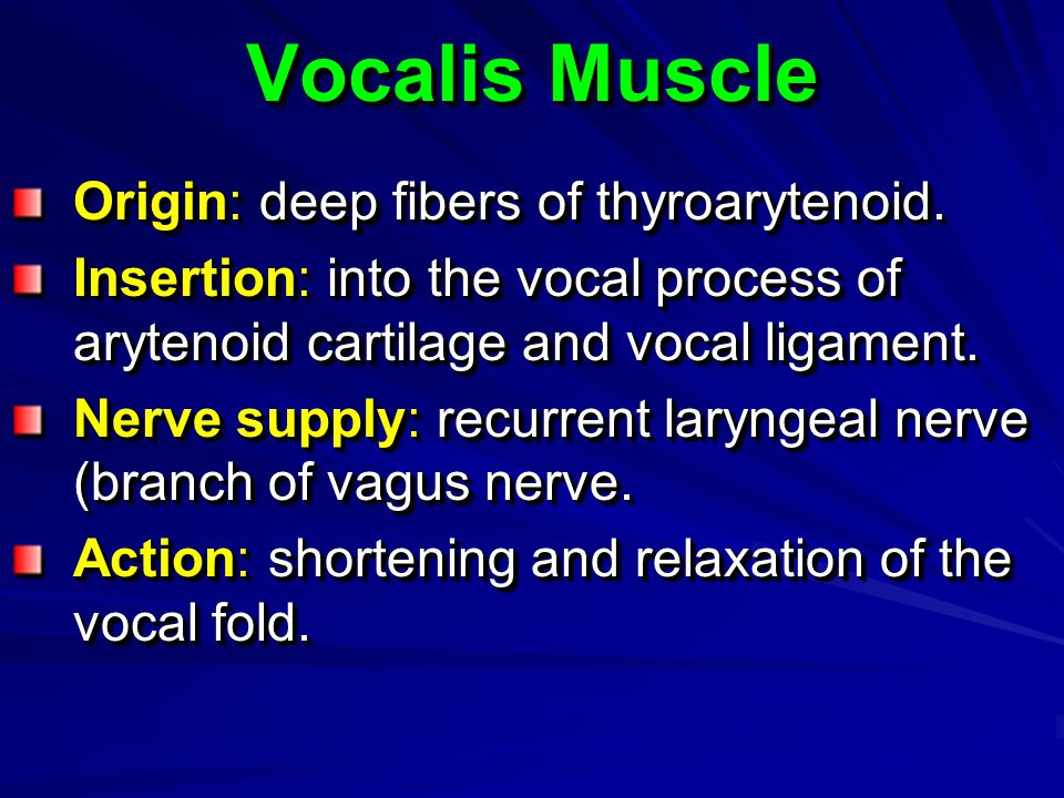 Vocalis Muscle Origin: deep fibers of thyroarytenoid.