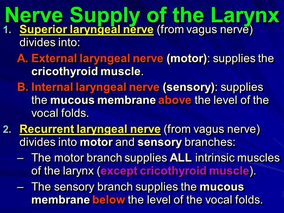Nerve Supply of the Larynx