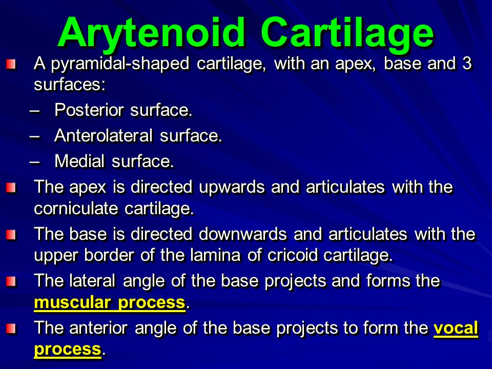 Arytenoid Cartilage A pyramidal-shaped cartilage, with an apex, base and 3 surfaces: Posterior surface.