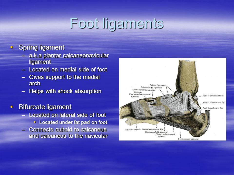 Foot ligaments Spring ligament Bifurcate ligament