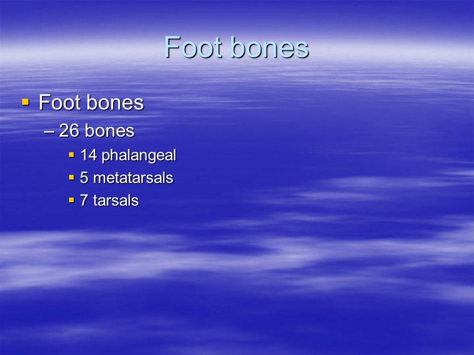 Foot bones Foot bones 26 bones 14 phalangeal 5 metatarsals 7 tarsals