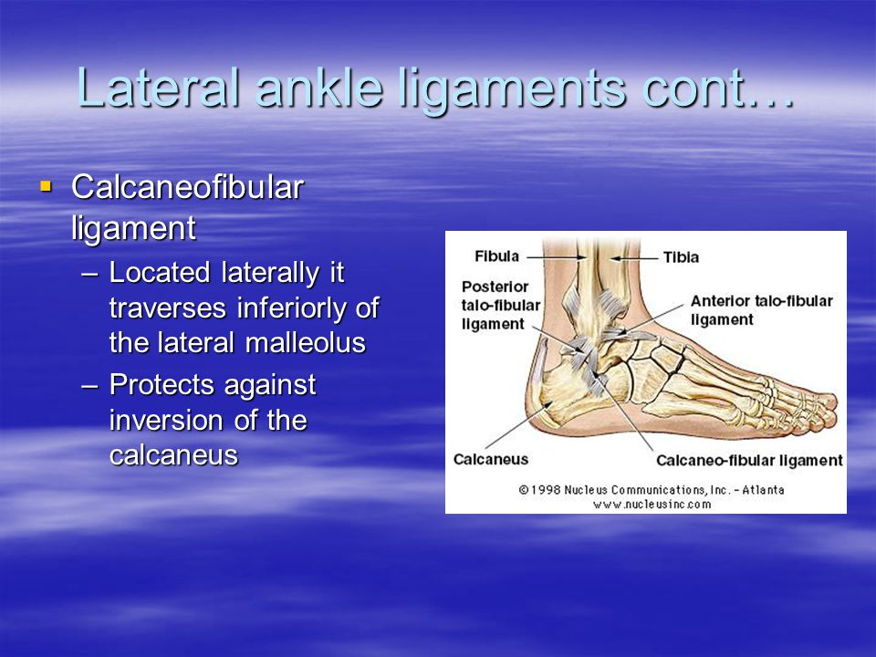 Lateral ankle ligaments cont…