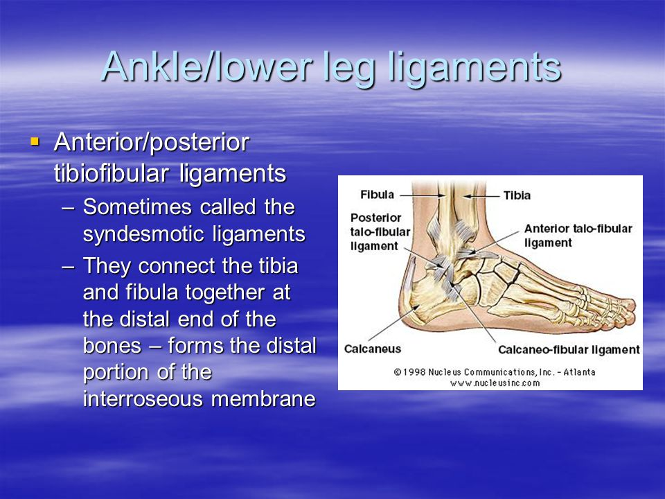 Ankle/lower leg ligaments