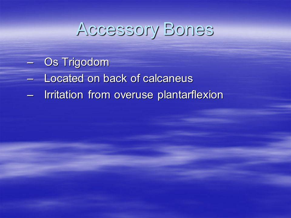 Accessory Bones Os Trigodom Located on back of calcaneus