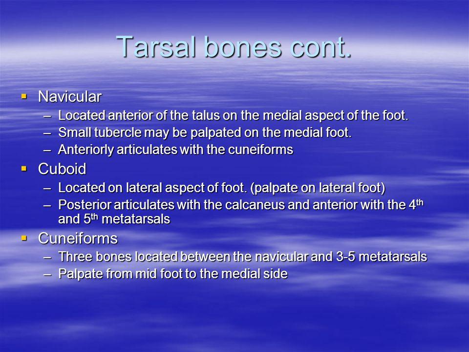 Tarsal bones cont. Navicular Cuboid Cuneiforms